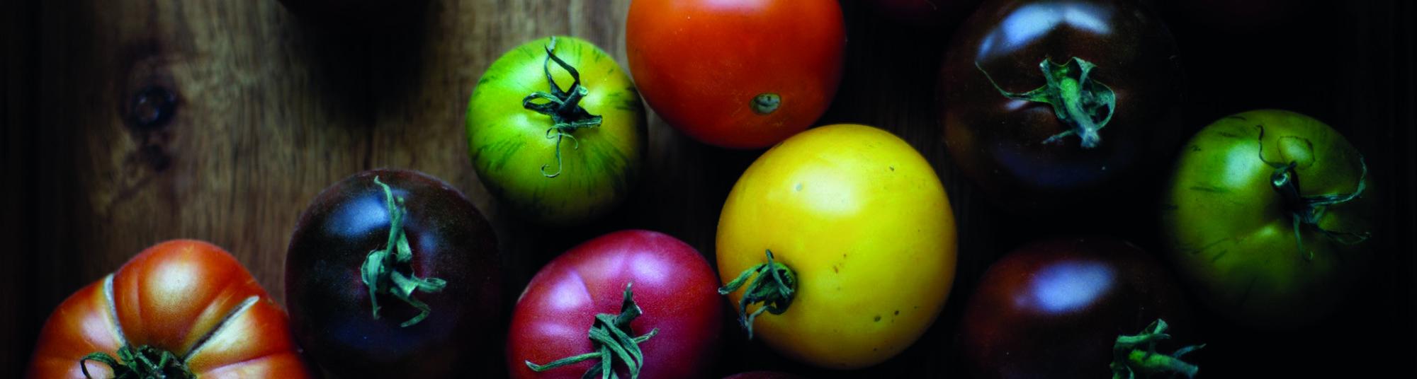 Header, Tomater, lille