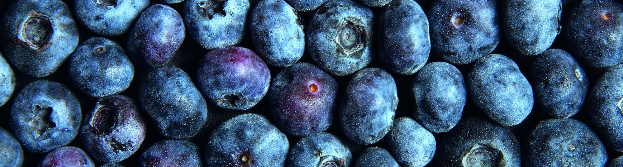 Header, blåbær, lille